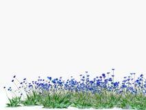 cornflowers sur le fond blanc Photos libres de droits