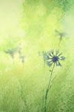 Cornflowers tło Zdjęcie Royalty Free