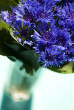 Cornflowers in a vase. Flowers in a vase (selective focus Stock Photography