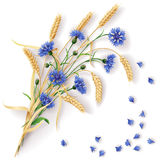 Cornflowers and wheat ears bunch Stock Images