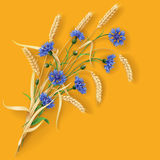 Cornflowers and wheat ears on orange Royalty Free Stock Photography