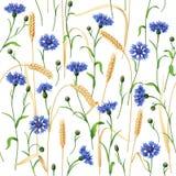Cornflowers and Wheat Ears Pattern Stock Photos