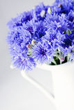 Cornflowers. In white vase Royalty Free Stock Photography