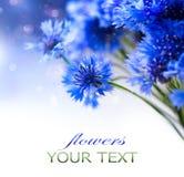 Cornflowers. Wild Blue Flowers. Blooming. Border Art Design stock photography