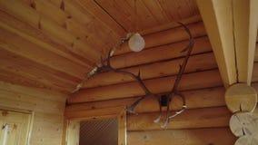 Corni di un cervo su una parete di legno stock footage