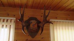 Corni di un cervo su una parete di legno video d archivio