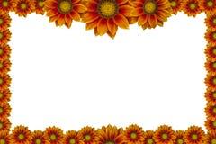 Cornice del fiore isolata su fondo bianco immagini stock