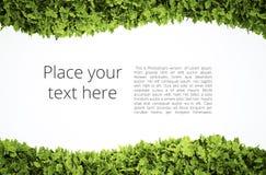 Cornice di testo di Eco Fotografia Stock