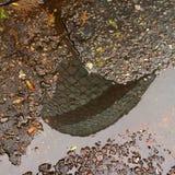 cornichon Photographie stock libre de droits