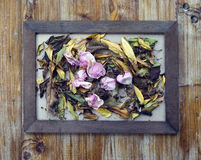 cornici e fiori e foglie Fotografia Stock Libera da Diritti