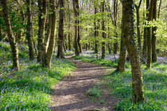 Cornish δασώδης περιοχή στοκ φωτογραφία με δικαίωμα ελεύθερης χρήσης