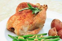 cornish курица стоковые фото