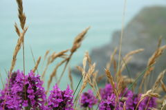 Cornish Beach. View from a beach in Porth, Cornwall Royalty Free Stock Images