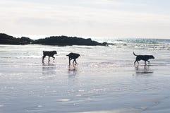 Cornish beach. Beautiful Cornish coastline in England Royalty Free Stock Image