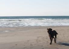 Cornish beach Stock Image