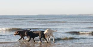 Cornish beach Stock Photography