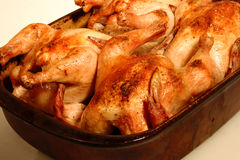Cornish Game Hens. Four golden brown cornish game hens in a stone baking dish on a white background Stock Photography