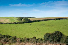 Cornish Landscape Royalty Free Stock Photography