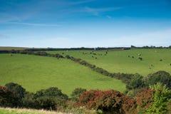 Cornish Landscape Stock Image