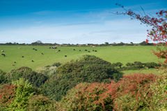 Cornish Landscape Stock Photography