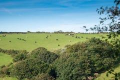 Cornish Landscape Royalty Free Stock Photo