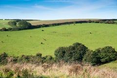 Cornish Landscape Royalty Free Stock Photos