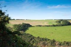 Cornish Landscape Royalty Free Stock Image