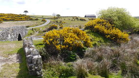 Cornish Landscape at Temple. Bodmin on the moor. An old stone wall and gorse growing at Temple on Bodmin in the Moor Cornwall England Stock Photo