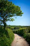 Cornish lane Royalty Free Stock Image