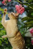 Cornish Rex Cat Playing with Flowers Stock Photos