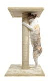 Cornish Rex Cat and Scratching Post. Isolated on white background Royalty Free Stock Photo
