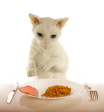 Cornish-rex and food Royalty Free Stock Photo