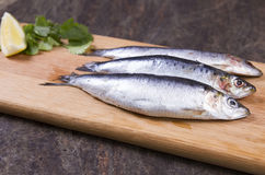Cornish sardines. Three Cornish sardines on a board Royalty Free Stock Images