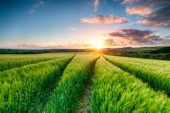 Cornish Sunset over Farmland stock image