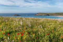 Cornish Wildflower Meadow Royalty Free Stock Images