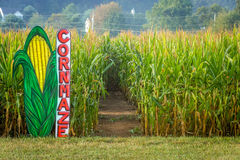 Cornmaze in Cornfield royalty free stock photos
