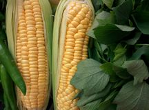 Cornny. Corn , leafy vegetables, healthy food Stock Image
