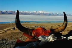 Corno dei yak Fotografia Stock