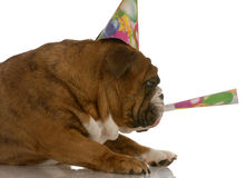 Corno di salto di compleanno del cane immagine stock