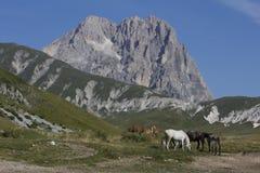Corno Grande met paarden Royalty-vrije Stock Afbeelding
