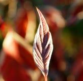 Cornouiller en automne Photographie stock