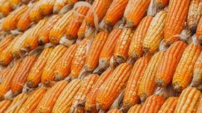 Corns высушенные желтым цветом Селективный фокус Стоковая Фотография RF