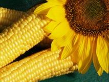 Corns и солнцецвет Стоковые Фото
