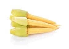 Corns младенца на белой предпосылке Стоковое Изображение