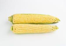 2 corns на белой предпосылке Стоковая Фотография RF