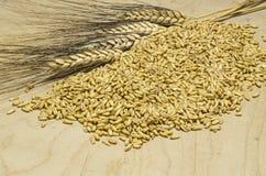 Corns овса Стоковое Фото