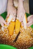 Corns сбора Стоковые Фотографии RF