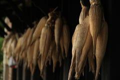 corns сушат Стоковые Фотографии RF