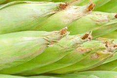 corns сырцовые Стоковые Фотографии RF