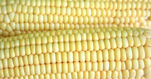 Corns. Two corns in close-up view Stock Images